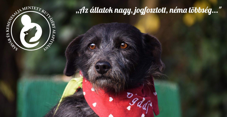 Sárvár és Kemenesalja Mentett Kutyáiért Alapítvány